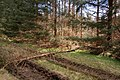 Fallen tree in Coille Ghlinne Bhig - geograph.org.uk - 168501.jpg