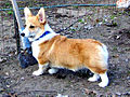 Farmdog.jpg