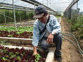 Farmer Romy in his organic LaTop Farm in Benguet, Baguio, Philippines - 1 (10694739384).jpg