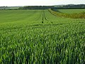 Farmland, Micheldever - geograph.org.uk - 441777.jpg