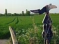 Farmland and cycle network signpost, Sutton Courtenay - geograph.org.uk - 800802.jpg