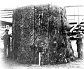 Fashioning a house out of a stump, Larson Lumber Co mills, Bellingham, Washington, ca 1903 (INDOCC 26).jpg