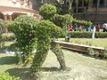 Fauji-soldier-shaped-plant.jpg