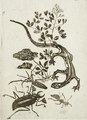 Felicien Rops, Japanese Salamander and Beetle (no date) aquatint (9.21 x 6.67 cm) Los Angeles County Museum.tif