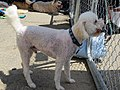 Fence Factory Ventura Pet Adoptions - panoramio (1).jpg