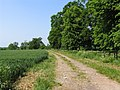 Field, track and trees - geograph.org.uk - 183776.jpg