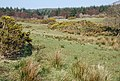 Fields of gorse - geograph.org.uk - 377032.jpg