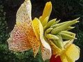 Flor con manchas 2 - panoramio.jpg