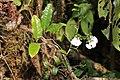 Flora Madagaskar 08.JPG