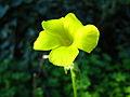 Flower (356381738).jpg