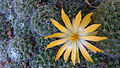 Flower cactus.jpg