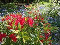 Flowers (9058976379).jpg