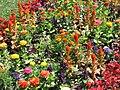 Flowers Park Budapest 2005 148.jpg