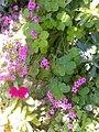 Flowers of Baghdad 7.jpg