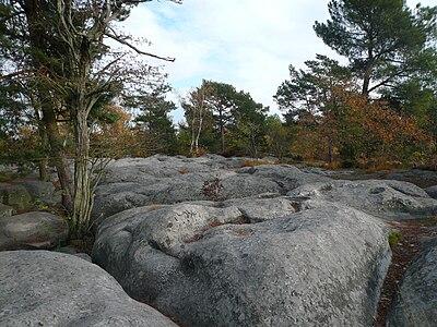 Fontainebleau Platière Apremont.JPG