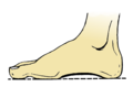 Foot Arche (PSF).png
