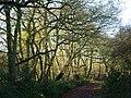 Footpath among trees - geograph.org.uk - 1608632.jpg