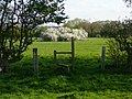 Footpath and stile leading to pond and May blossom - geograph.org.uk - 1623561.jpg