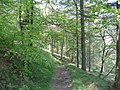 Footpath from Cwmcarn to Twmbarlwm - geograph.org.uk - 423329.jpg
