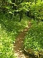 Footpath near Washwalk Mill - geograph.org.uk - 1323650.jpg
