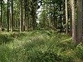 Footpath through Cloughton Woods - geograph.org.uk - 491552.jpg