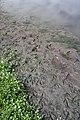 Footprints in the mud - geograph.org.uk - 1426086.jpg