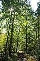 Forêt de Bon-Secours 10.jpg