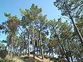 Forêt de Suzac (4).JPG