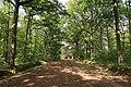 Forêt domaniale de Bois-d'Arcy 23.jpg
