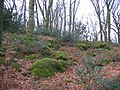 Forest floor, Sallochy - geograph.org.uk - 126562.jpg