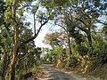 Forests of Western Ghats at Hornadu 02.JPG