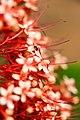 Formiga caminha sobre flores.jpg