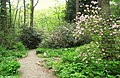 Garden in the Woods - IMG 2462.JPG