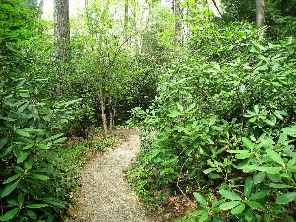 File Garden In The Woods Img 2469 Jpg Wikimedia Commons