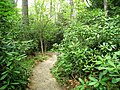 Garden in the Woods - IMG 2469.JPG
