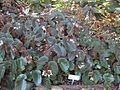 Gardenology.org-IMG 1199 rbgs10dec.jpg