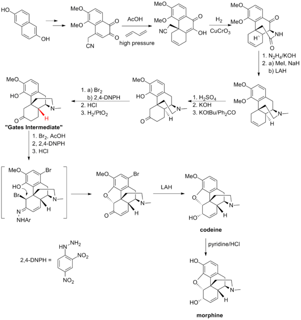Total synthesis of morphine and related alkaloids - Wikipedia