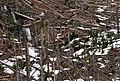Gifford Pinchot National Forest, Mt St Helens NVM-4 (36361247183).jpg