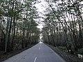 Gisoum-forest -1.JPG