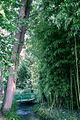 Giverny - Bras de Epte (2).JPG