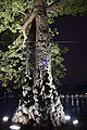 Gnarled tree (40223577732).jpg
