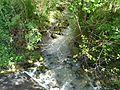 Gouyne (affl Dordogne) D13 aval (1).jpg