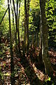 Gråor-skog etter Olterudelva på Toten AB.JPG