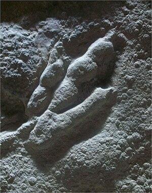Grallator - Negative footprint of G. cuneatus showing skin impressions