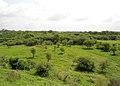 Grasslands at Medchal Town.JPG