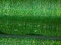 Green (5842827645).jpg
