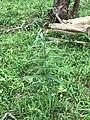 Green flower 001.jpg