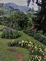 Group of flowers at Hakgala botanical garden,.jpg