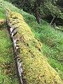 Gwaii Haanas National Park (27277732580).jpg