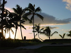 PALM TREES IN SIHLOUTTE Hawai`i: PĀMĀ
